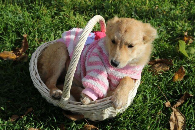 Отдаем щенка в добрые ручки ( щенок щенки собака )