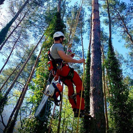 Pielęgnacja i wycinka drzew metoda alpinistyczna