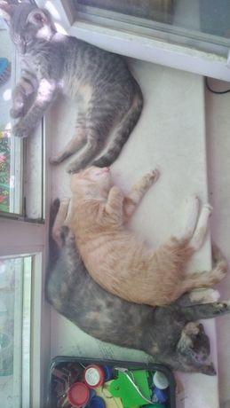 Домашнии котята  .