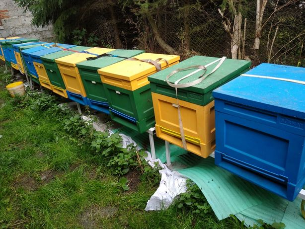 Zapylanie upraw pszczoły ule