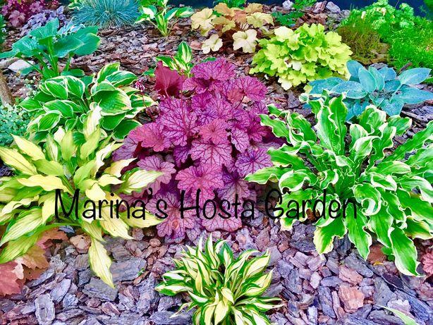 Растения для сада хоста гейхера рододендрон лилейник барвинок и др.