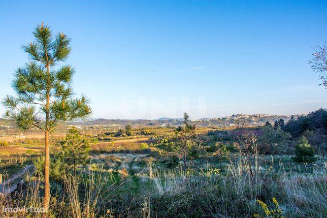 Terreno Rústico  Venda em Vale Formoso e Aldeia do Souto,Covilhã