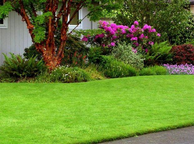 Насіння газонних трав - Газонна трава - Семена газонных трав