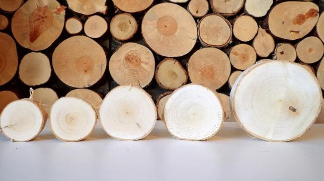 Plastery drewniane krążki drewna brzoza 15-18 cm dąb, fleki,