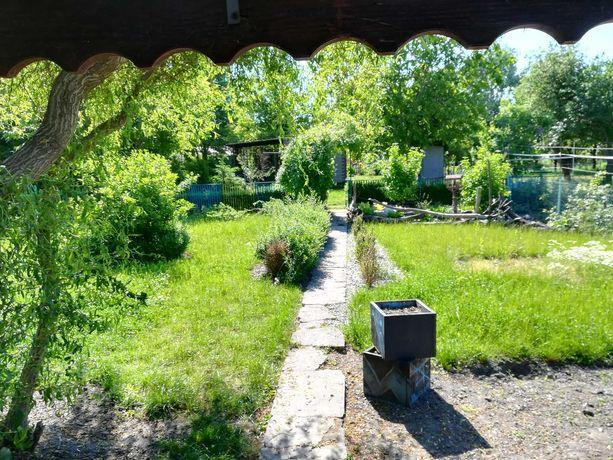 Ogródek dzialkowy ROD rekreacyjny w centrum