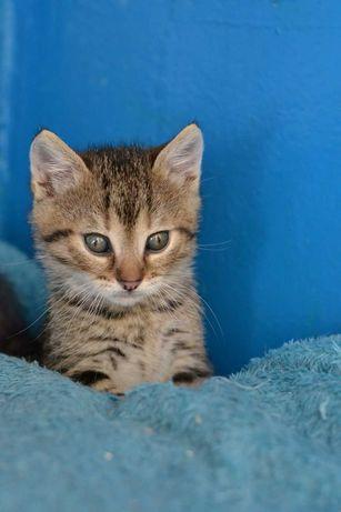 шпротичок-котичок хлопчик 1,5м