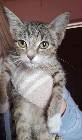 Kotek kotka szuka domu pilne