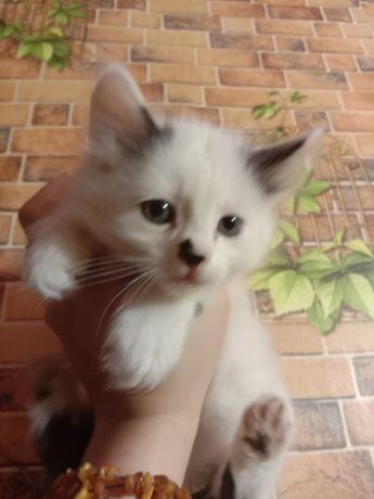 Котята ищут семью. Котенок в хорошие руки бесплатно. Отдам даром.
