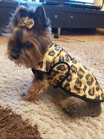 Ubranko bluza dla pieska yorka psa