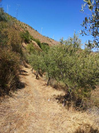 Terreno Certificado Agricultura Biológica - URGENTE