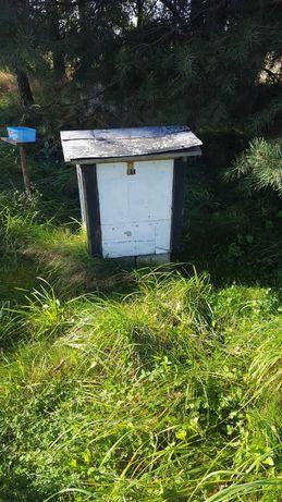 Ule warszawskie czyste nigdy nie było w nich pszczół