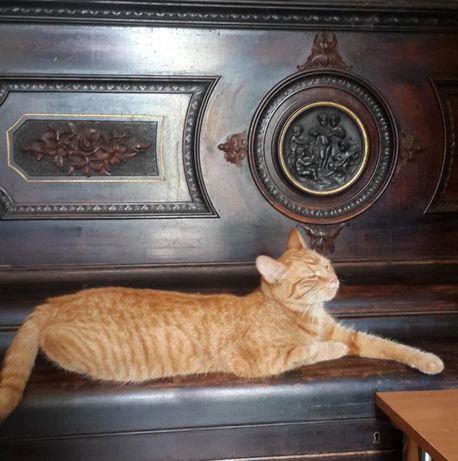 Рыжая кошка и рыжий кот, 1 год