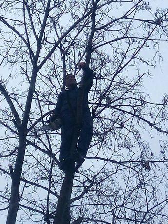 Незнаете как спилить дерево,мы поможем,Одесса