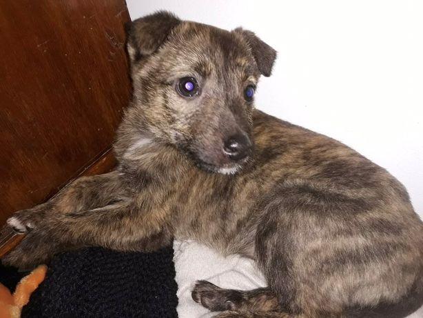 ANDY - psie dziecko do adopcji
