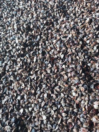 Nasiona gryki na poplon
