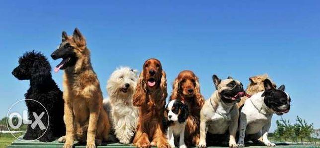 Szkolenie psów tresura