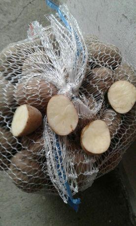Ziemniaki wielkość sadzeniaka możliwość wysyłki