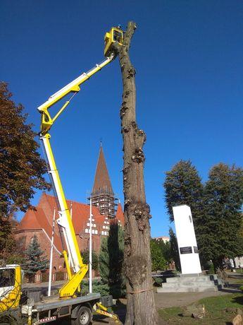 Wycinka drzew. Przycinka żywopłotów. Usługi podnośnikiem.