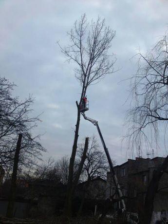 Wycinka Koszenie Żywopłoty Rębak Karczowanie Szybko Tanio Solidnie!!