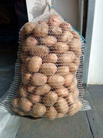 Ziemniaki ekologiczne IRGA
