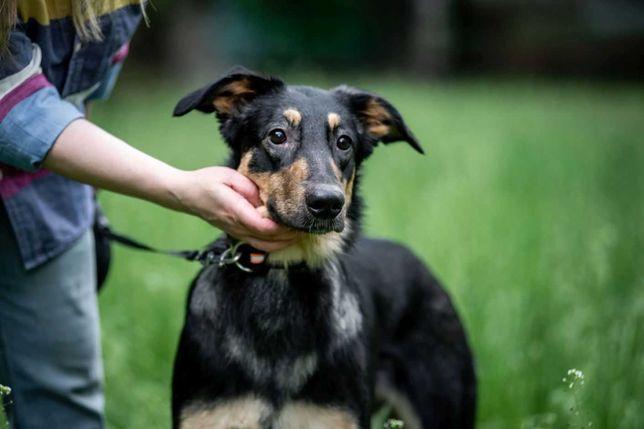 отдам собаку, девочка, стерилизована,есть охранніе качества