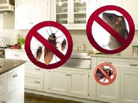 Уничтожение тараканов, клопов, клещей, блох, крыс и мышей с гарантией!
