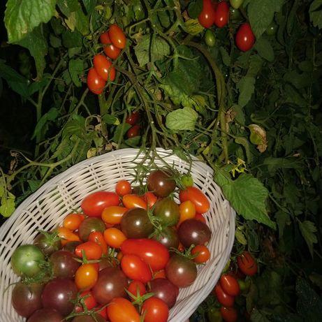 Tomate mini MIX 100% bio