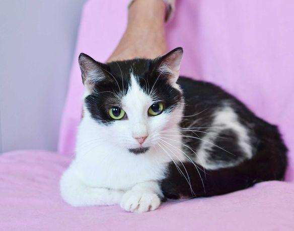 Айси, черно-белая кошка, 1 годик кошечке / кот котенок