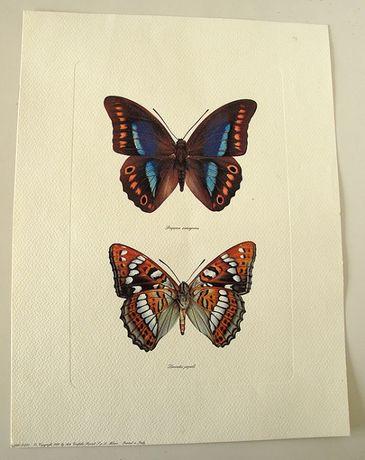 Gravuras: borboletas e aves