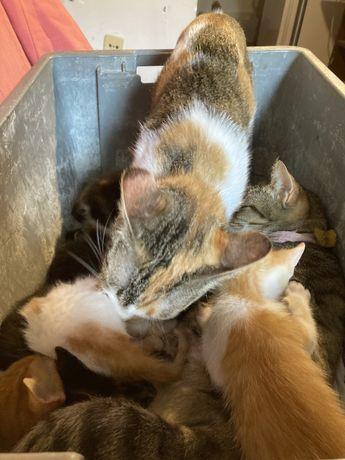 Gatinha bebe para doar (LER descricao por Favor)