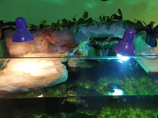 Akwarium dla żółwia z tłem strukturalnym i wodospadem