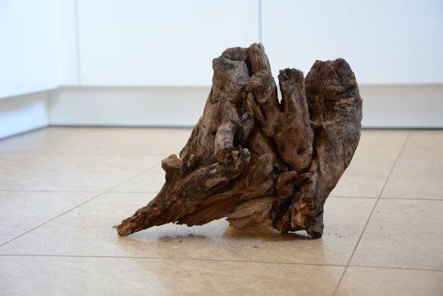 Korzeń do akwarium - czarna olcha 28 cm
