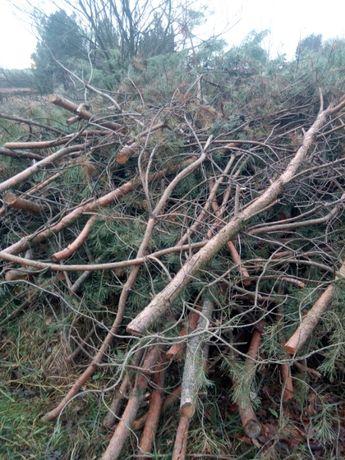 Oddam drewno, gałęzie pozostałości pozrębowe