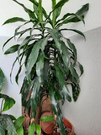 Planta de interior exterior