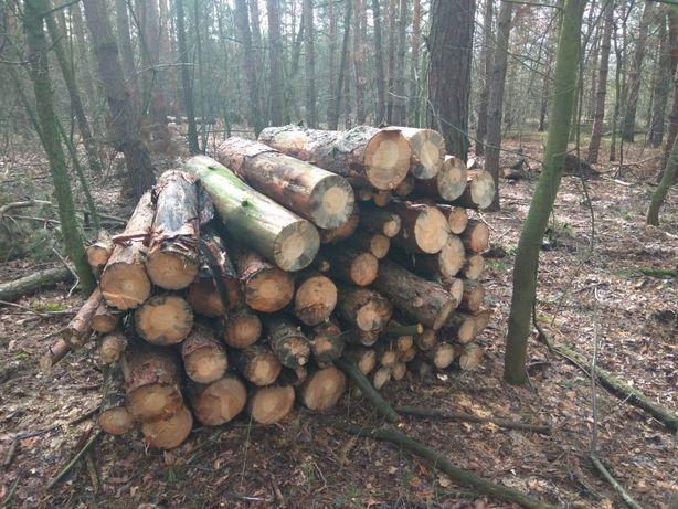 Drewno opałowe sosnowe, SOSNA