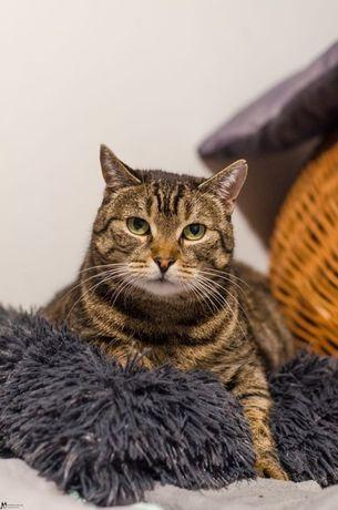 Beti - FeLV+; ponad wszystko kocha człowieka, a także inne koty