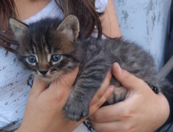 Отдам малышей-котят
