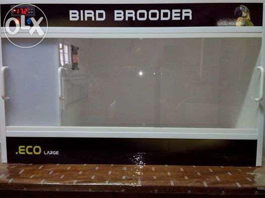 Criadeira/maternidade para aves exóticas (psitacideos)