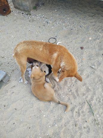 Собака добрым людям