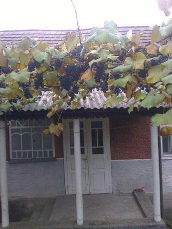 Продам будинок з виноградником у мальвничьому краю Закарпаття