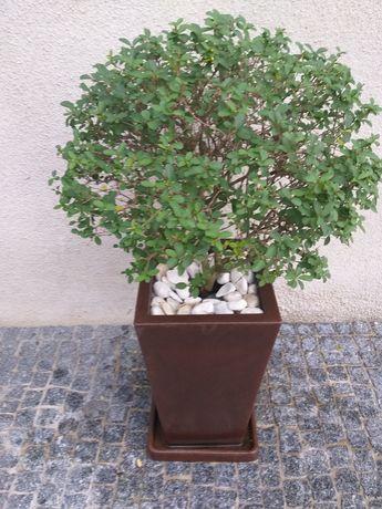 Vaso+(planta,prato e pedras)
