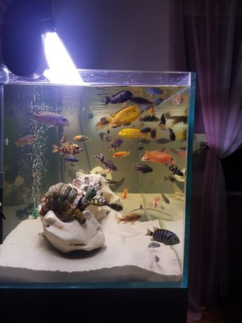 Akwarium Opti White  300l Zestaw