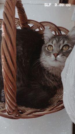 Квартирная зоогостиница/передержка котов, птиц и грызунов!