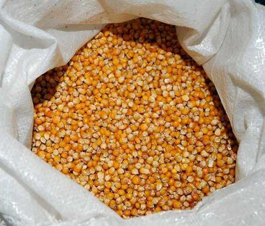 продам кукурузу, пшеницу,ячмень,горох,сою,(полтавский комбикорм)