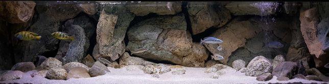 Akwarium 200x55x55 - Wszystko - Malawi - Back To Nature