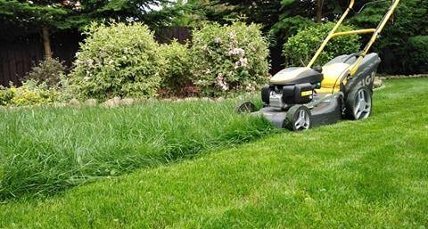 Kompleksowe usługi ogrodnicze. Zakładanie, pielęgnacja, nawadnianie