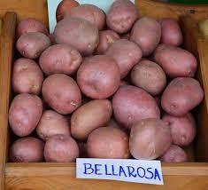 Ziemniaki jadalne czerwone Bellarosa smaczne 10zl/15kg