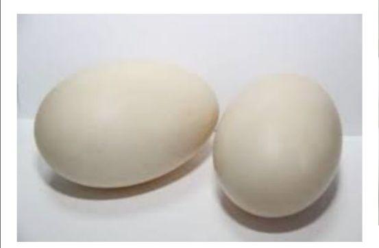 Фрвнцузкое яйцо Муларда