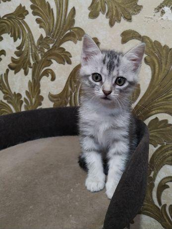 Котёнок кошечка