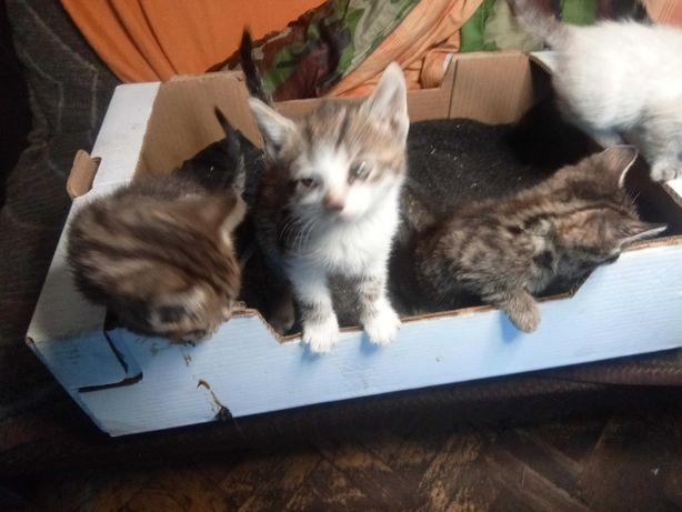 kotki małe odda za darmo